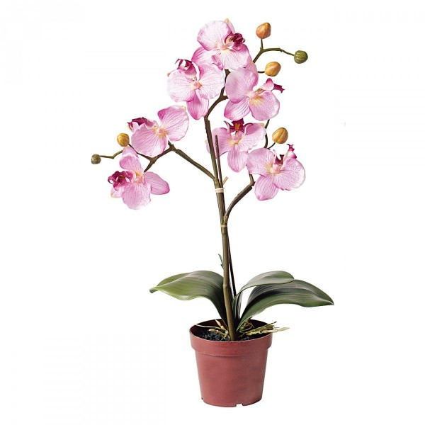 Orchidee In Pot Roze
