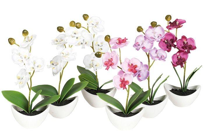 Mini Orchidee In Schaal 18Cm