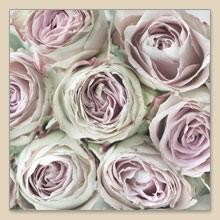 Servetten Pink Roses 33x33cm
