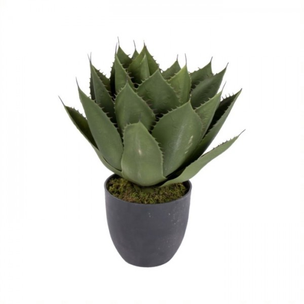 Home Society Plant Maguey